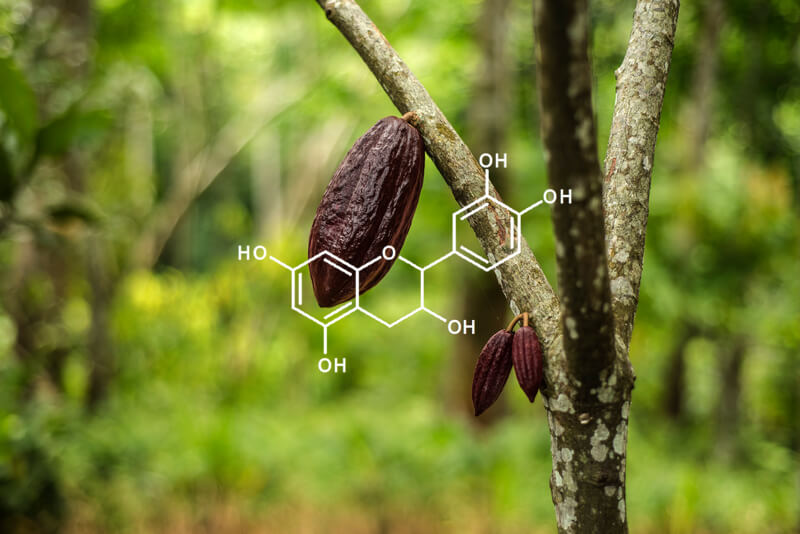 Cocoa pod hanging on a tree with overlaying image of flavanols chemical structure
