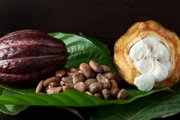 Cocoa pod with beans on a leaf and a cross-section of a cocoa pod