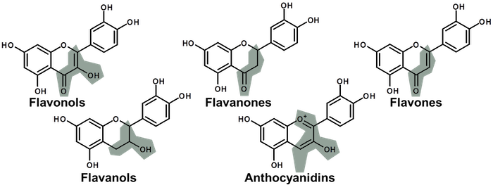 flavanoids chemical structures